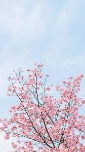 خلفيات ايفون ورد طبيعي Iphone Wallpapers Hd Download Flowers Photography Wallpaper Spring Desktop Wallpaper Spring Wallpaper