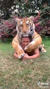 Cute overloads😍😘😍 #tiger #animals #animal #pets #tigers