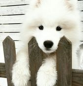 66 Trendy Dogs And Puppies Pets So Cute