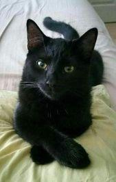 ☾☼MistressBarbie☼☽ #cats #cutecats gatos | gato lindo | gatos lindos y gatito …   – Tiere
