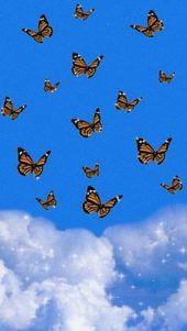 Н•»ð–†ð–•ð–Žð–'𝖑𝖔𝖓 In 2020 Butterfly Wallpaper Phone Wallpaper Images Wallpaper Iphone Love