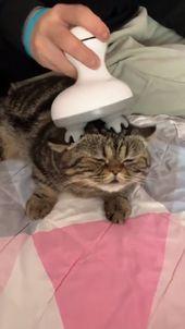 Diez razones reveladoras por las cuales todos deberían tener un gato #cat #catlover #catfacts #ilovecats #cats    – Tiere