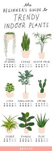 Der Anfängerleitfaden für trendige Zimmerpflanzen – E. R-berg