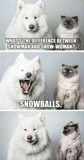 Genießen Sie amüsante Haustier Meme, die aus Haustier Katze Meme