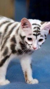 Needle Gin aus dem Schwarzwald / Hot Cinnamon Milk mit Gin – Cute cats