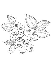 Blueberry coloring page from Blueberry category. Select from 24104 printable cra…
