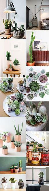 interior sunday: cactus love