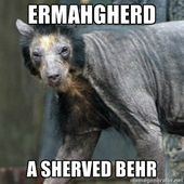 shaved bear – Google Search Brenna Schrimsher