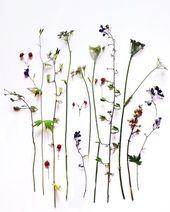 ja-soon-kim-botanical-arrangements-6  – Botanical