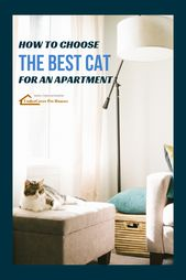 Best Cats for Apartments – Tips for Cat Parents