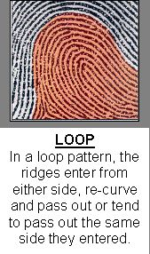 Are Fingerprint Patterns Inherited Science Projects For Kids