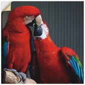 Wandfolie »Jeder Schmid-Neebe: Papageien«