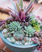 Cactus & Succulent Bowls