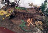 Réplicas exactas de anfibios y reptiles, en la Casa de las Ciencias   – Museo Geominero