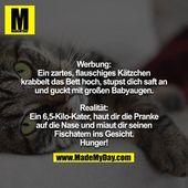 Werbung: Ein zartes, flauschiges Kätzchen krabbelt das Bett hoch, stupst dich s… – Wahre Worte