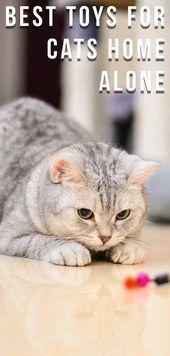Boredom Busters – Das beste Spielzeug für Katzen – Alleine zu Hause! – meow -, …