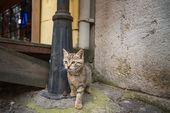 Die Katzen von Istanbul