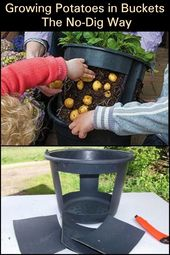 Make rising and harvesting potatoes simpler!