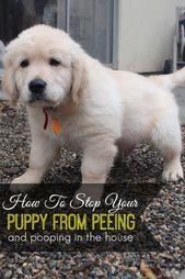 La fuente original presupuesta las técnicas de entrenamiento del perro   – Pet Parents Tips