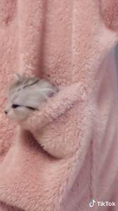 So ein süßes Känguru-Kätzchen – #kangaroo #kitty #sweet #tiere