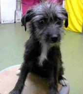 Devore Ca Puppy Mimi Id A695486 I Am A Female Black And