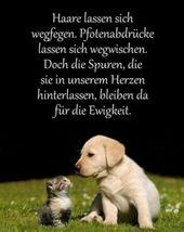 Lustiges Bild – Leben bedeutet. png – Eine von 15752 Dateien in der Kategorie.   – Hunde