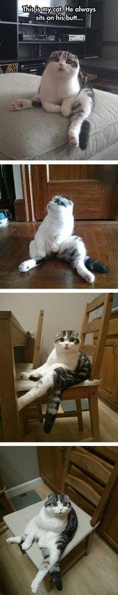 Es ist die würdige Art und Weise für eine Katze zu sitzen – die #one #es #funny #f …   – OMG