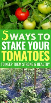 The 5 Best Ways to Stake Your Tomatoes