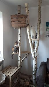 Birkenscheiben Fichtenscheiben Scratcher Kratzbaum Birkenstämme   – Katzen