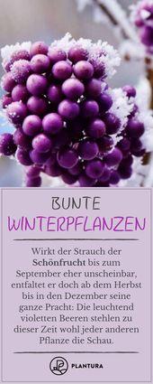 Bunte Pflanzen im Winter: Die 10 schönsten Arten