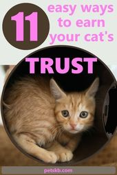 How To Earn a Cat's Trust by petskb.com – Discover 11 ways to gain your cat's tr… – Cat Guide