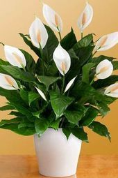 Eine Blume in jedem Raum! 12 Pflanzenvorschläge Sie können problemlos an verschiedenen Orten …