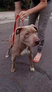 Dog Odor Eliminator Spray Discountdogdental Dogs Dog Insurance Dog Walking