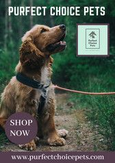 Purfectchoicepets Com Is An Online Pet Supply Store With Low Prices For Your Fur Babies It Offers A Cute In 2020 Pet Supplies Online Pet Supplies Pet Supply Stores