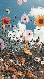pinterest l i n d s y m e r e l Hintergründe Blumen