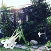 昨日は家族みんなでお墓参り お墓が遠いので 一年に一度 の行事 これが終わるとほっとして 夏が終わった感が満載 E Plants Garden