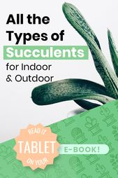 [ebook] Indoor & Outdoor Succulents!