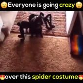 Halloween Party Horror Spider Costume for Pets
