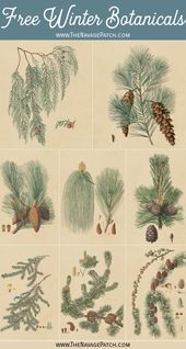 Free Winter Botanical Printables