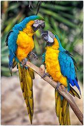 Frauen in der Fotografie – Community – Google+ Suzanne – wunderschöne tropische Vögel, … – Tiere – #beautiful #Birds #Community #Google #Ph