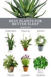 Beste Zimmerpflanzen zum Schlafen