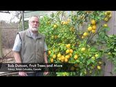Wachsende Zitronen und Limetten in Südküste BC, Kanada – YouTube – #BC #Kanada…