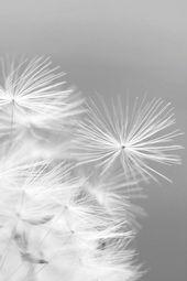 Douceur Des graines de pissenlits… ou des souhaits portés par le vent. Les cages en argent de cette collection sont faites pour les contenir. Lovée à l'intérieur de celle-ci avec de la dentelle, les graines tout comme les souhaits qu'elles représentent finiront par s'échapper portées par le vent… Mais rien ne vous empêches d'en remettre!