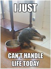 Ich bin Hund müde