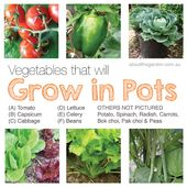 Australia vegetable garden that will grow in pots organic aboutthegardenmagazine
