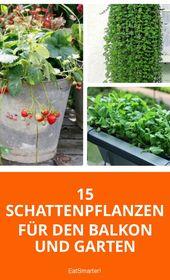 15 Schattenpflanzen für Balkon und Garten.