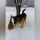#Gato vs #Perro # Divertido 😂😂😂   – Animals