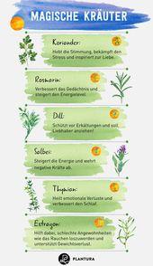 Die 10 besten Heilpflanzen aus unserem eigenen Garten