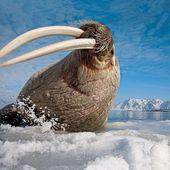 Ayuda a estos muchachos. Apoye a Chris Payne con nuestro camionero #walrus hecho de …   – OverYall