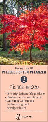 Pflegeleichte Gartenpflanzen: Die Top 10 für draußen